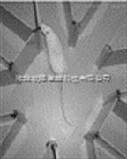 行为学产品大鼠八臂视频迷宫八臂迷宫刺激器