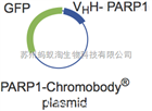 Chromotek/PARP1-Chromobody®plasmid