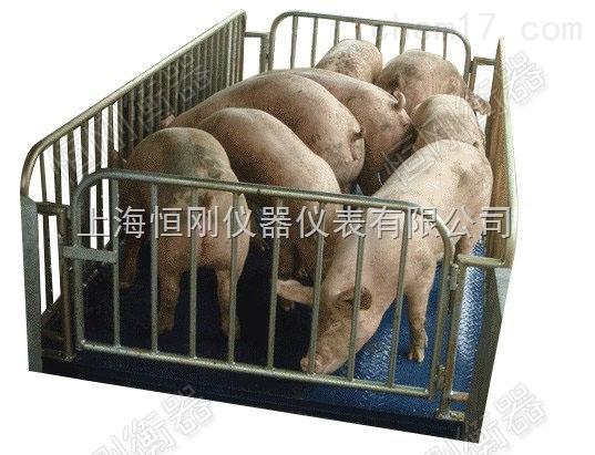 5噸活動圍欄動物秤,不銹鋼防水動物稱
