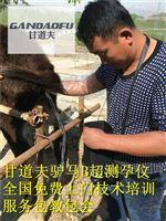 内蒙古驴马动物B超厂家今日报价价格表
