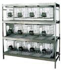 干样式兔笼架  豚鼠笼架设备