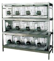 ZK-TLJ-G干样式兔笼架  豚鼠笼架设备