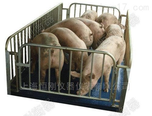 小型活畜动物秤,带打印围栏秤