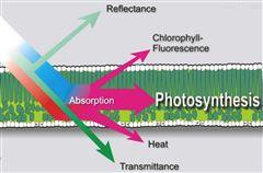 模塊式植物表型成像分析系統