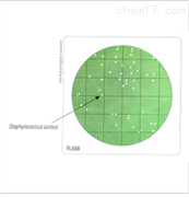 HiTouch™ SCD平板(含β-内酰胺酶)