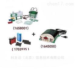 Mini-PROTEAN Tetra+Mini T1658033 垂直电泳转印系统