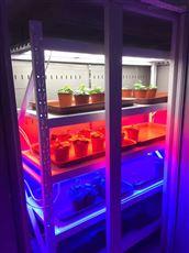 ZPG-250B植物催芽箱光照培养箱