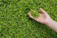 茶叶摊青房除湿机专业生产