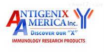 Antigenix America inc授权代理