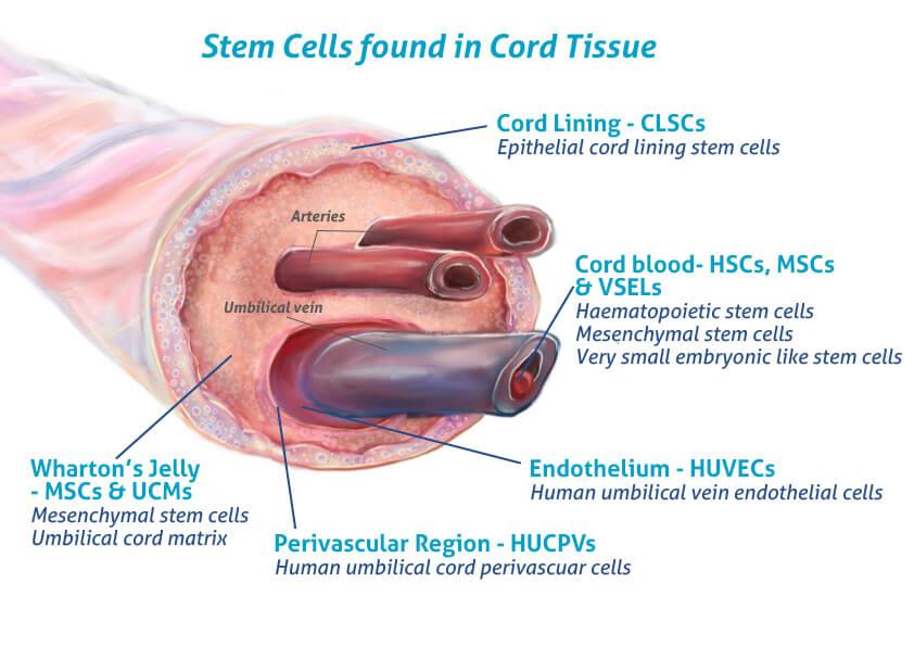 人脐带间充质干细胞的贴壁培养视频录话筒图片