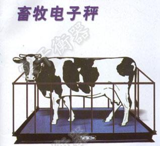 牲畜地磅秤