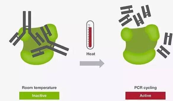 DNA聚合酶