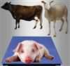 sg2吨动物电子秤