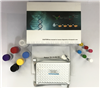48T 96T人皮动蛋白(CTTN)ELISA试剂盒现货直供