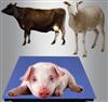 屠宰厂专用牲畜秤_500公斤牲畜秤报价单